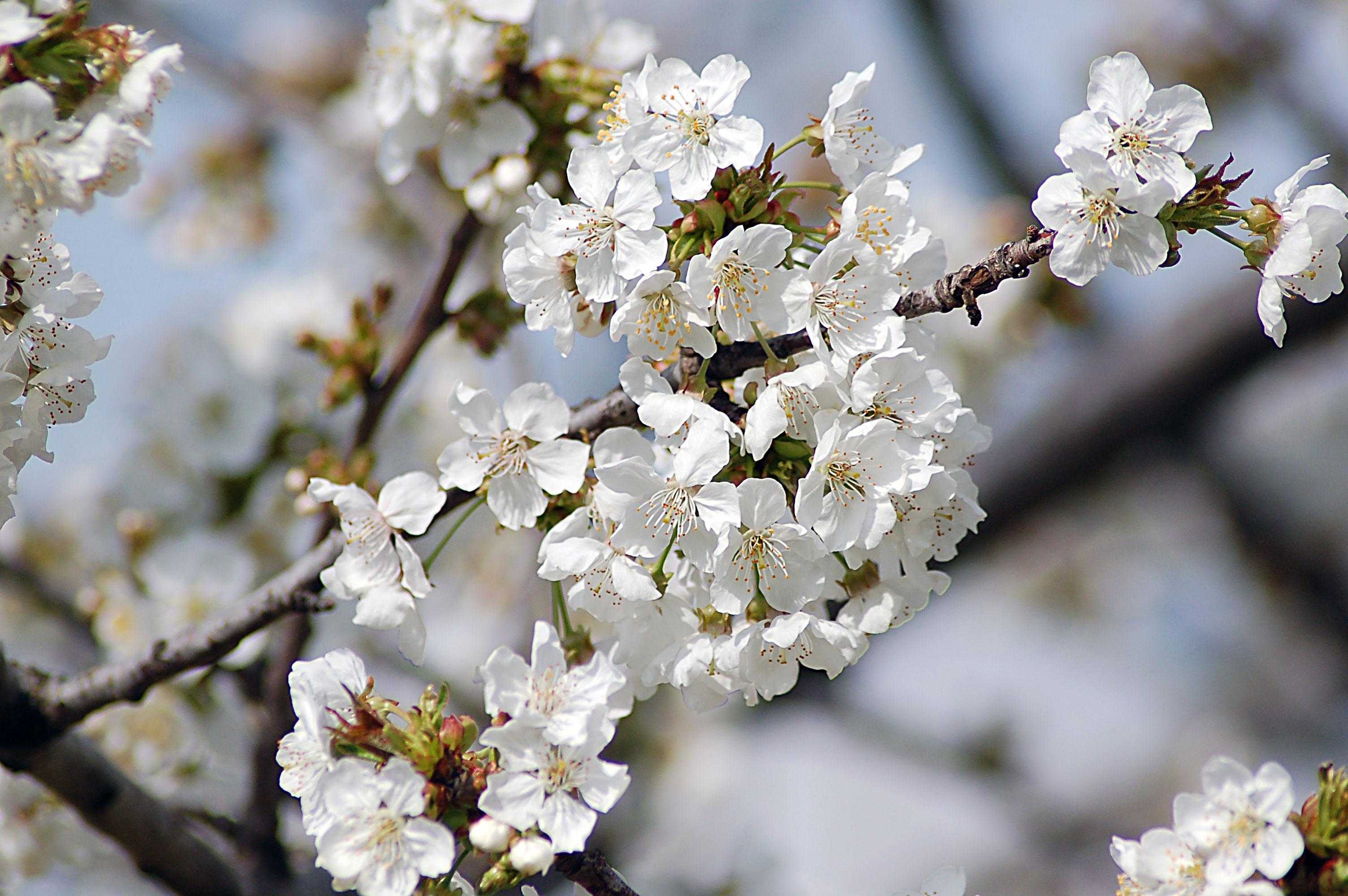 Gianfranco graniglia for Fiori piccoli bianchi